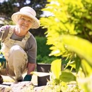 Older woman safely gardening to avoid a flare-up in her arthritis